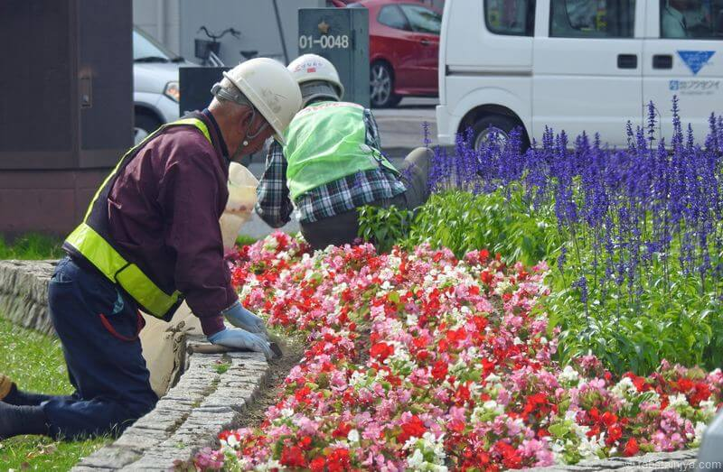 広島100m道路の花と緑