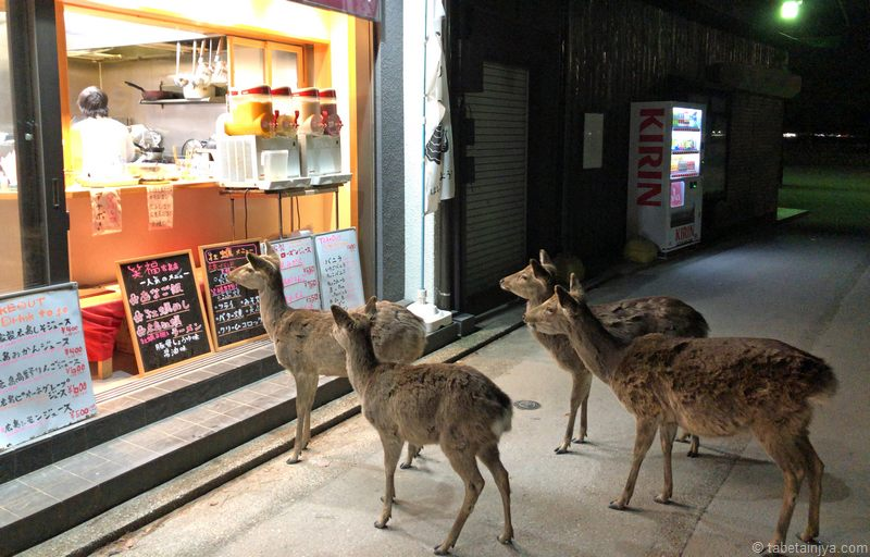 穴子飯の香りに誘われる、宮島の鹿たち