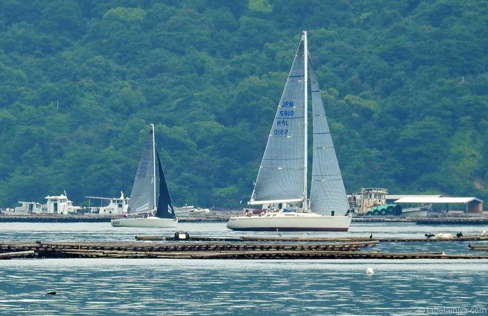宮島一周ヨットレース カキ筏の風景と