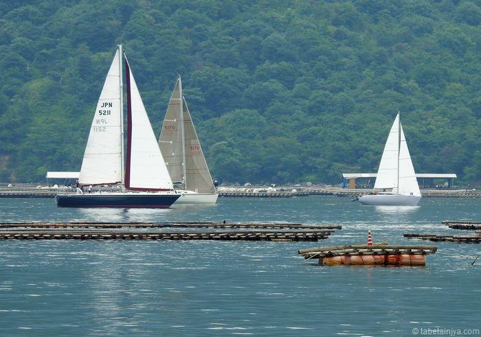 宮島一周ヨットレース カキ筏とヨットの風景